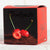 Chocolate Covered Grappa Dipped Pitted Cherries (9 pieces) - 7.05 oz