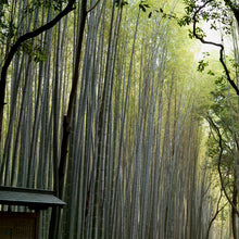 """Bamboo Forest"" Kyoto, Japan // archival pigment print"