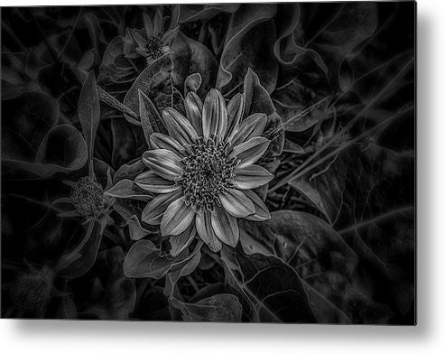 Black and white flower metal print