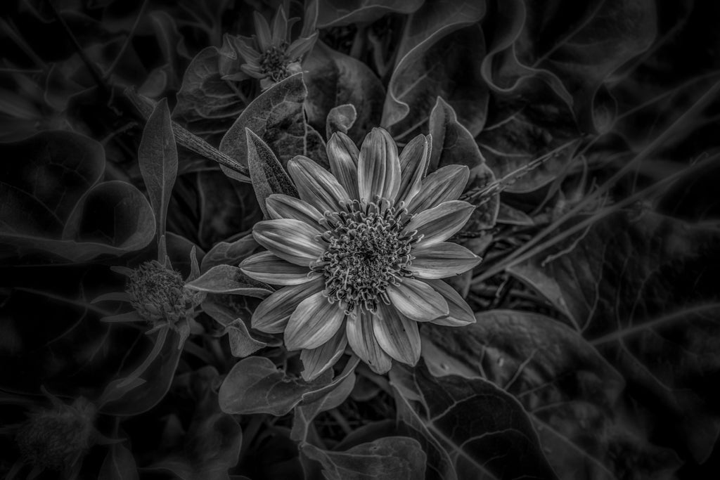 Black and white flower standard art print