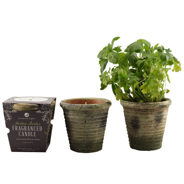 Northern Lights Candles / Herban Garden - Thyme & Parsley