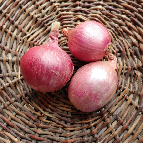 Image of French Rose Onion