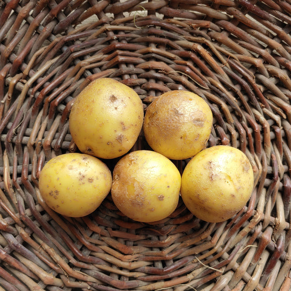 Image of Penny Potatoes