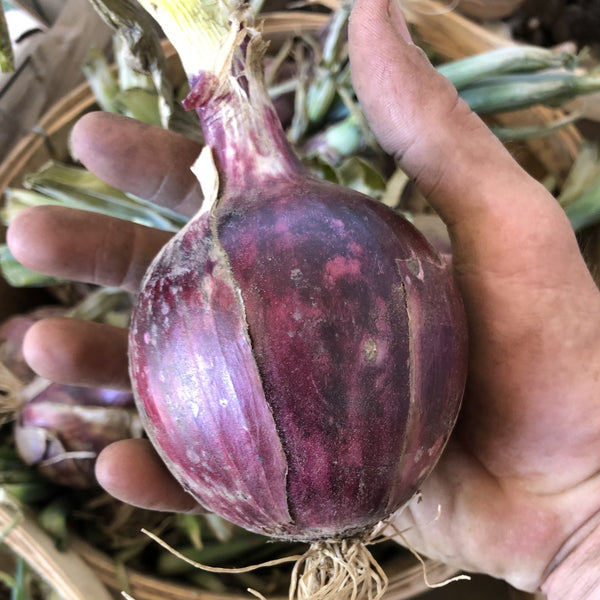 Image of Red Onion