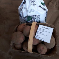 Potatoes, Norland Red (5lbs)