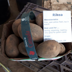 Potatoes, Rikea Yellow (1.5L)