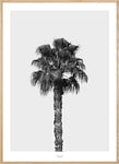 Beach Inspired Art, California Art, Desert Fan Palm, Palm Tree Art, Palm Poster, Mid Century Modern, 8x10 Art Print, Gray Wall Art, Posters
