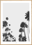 CALIFORNIA PALMS -  THE MIUUS STUDIO. Black and White photography of palms, modern wall prints for your home and new look. Most trendy poster ay our shop.