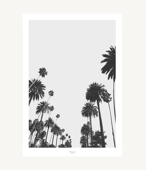 CALIFORNIA PALMS -  THE MIUUS STUDIO