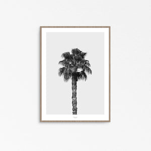 PALM TREE II -  THE MIUUS STUDIO