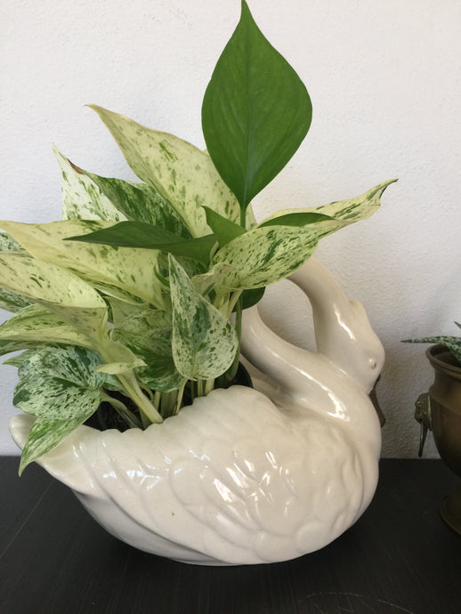 Vintage Swan Pottery Planter In White With Gold Accent USA Pottery