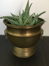 Load image into Gallery viewer, Vintage Bohemian Brass Lion Head Planter 1970s