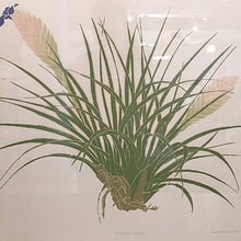 Load image into Gallery viewer, Vintage Framed Tillandsia Air Plant Print Bohemian