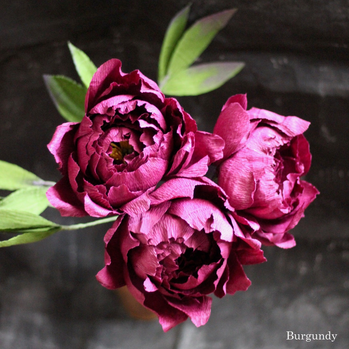 Peony (5 Color Options)