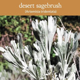 Sagebrush Smudge Wands - Big Sagebrush & Black Sagebrush (Mugwort)