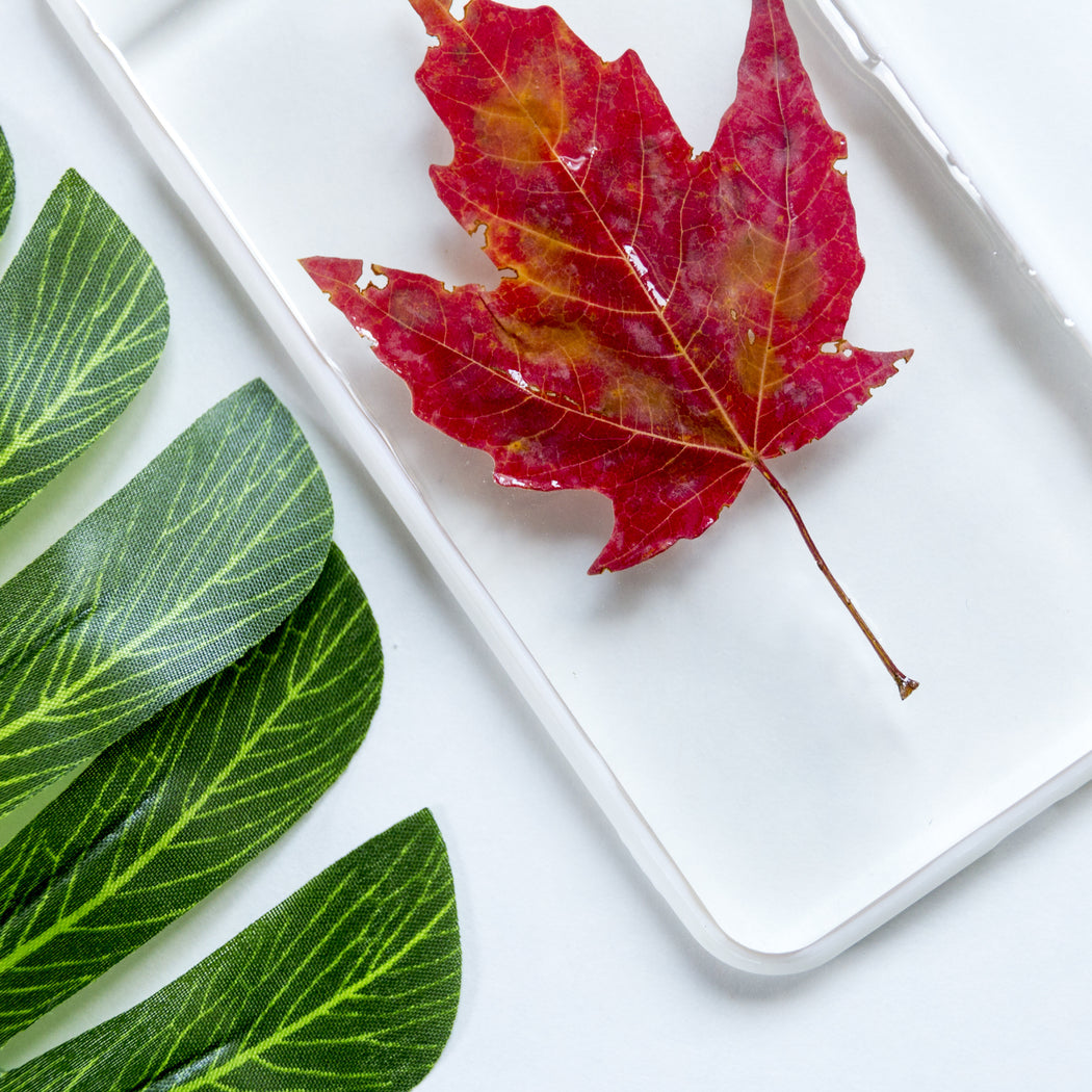 Maple Leaf | Pressed Flower iPhone Bumper Case | iPhone 7/8 Plus