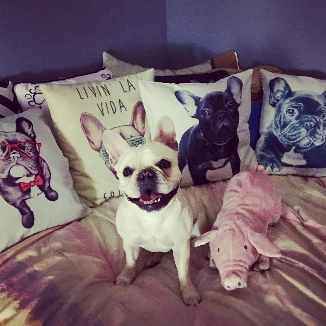 Frenchie Cushion Covers