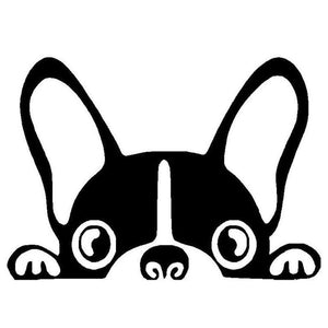 Boston Terrier Car Decal