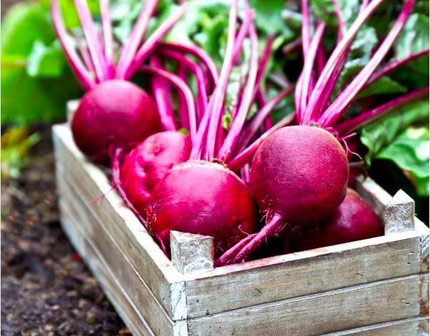 beetroot is good for your brain