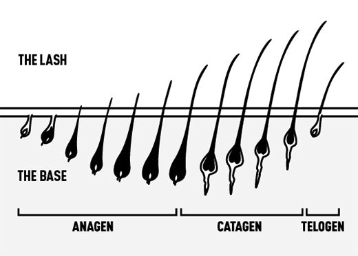 Lash Cycle