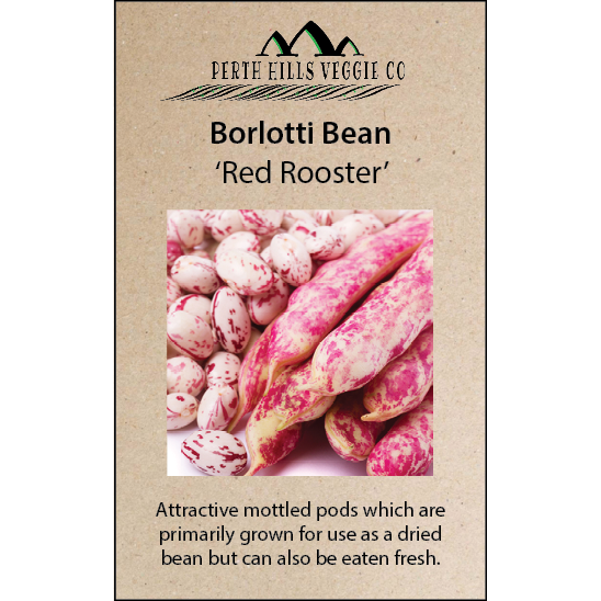 Borlotti Bean (Bush) 'Red Rooster'