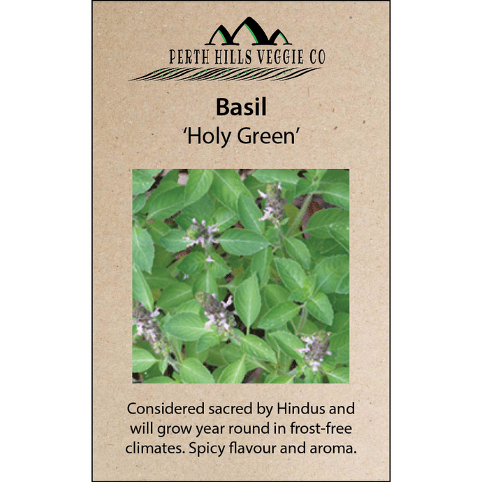 Basil 'Holy Green'
