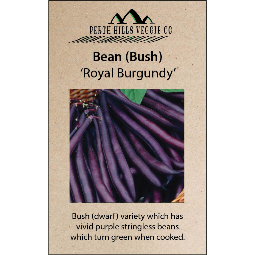 Bean (Bush) 'Royal Burgundy'