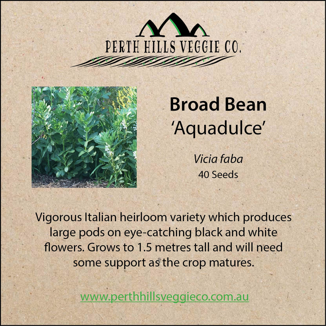 Broad Bean 'Aquadulce'