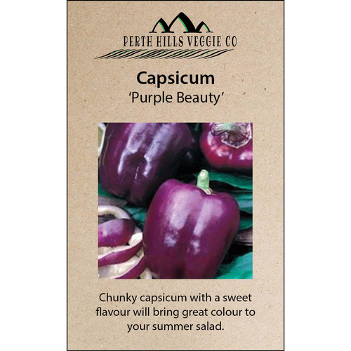 Capsicum 'Purple Beauty'