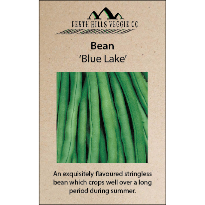 Bean (Climbing) 'Blue Lake'
