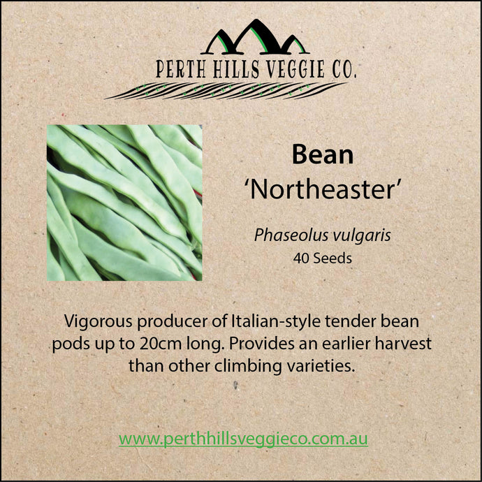 Bean 'Northeaster'