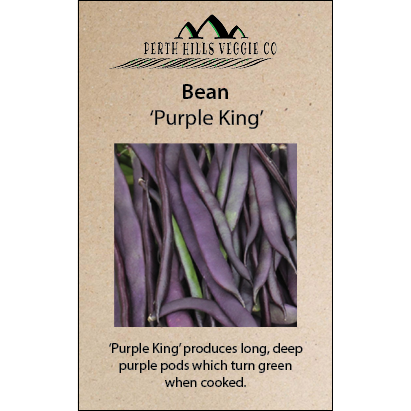 Bean (Climbing) 'Purple King'