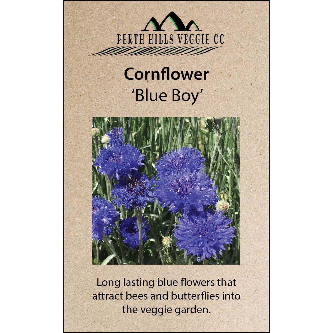 Cornflower 'Blue Boy' 20 gram Bulk Pack