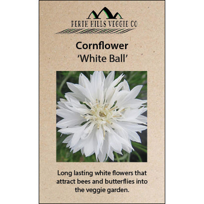 Cornflower 'White Ball'