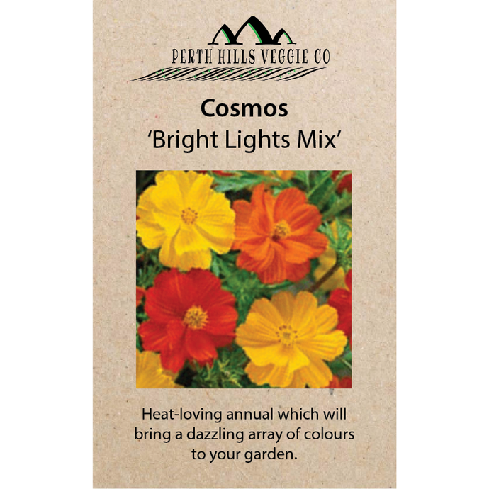 Cosmos 'Bright Lights Mix'