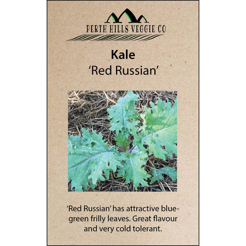 Kale 'Red Russian'
