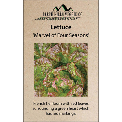 Lettuce 'Marvel of Four Seasons'