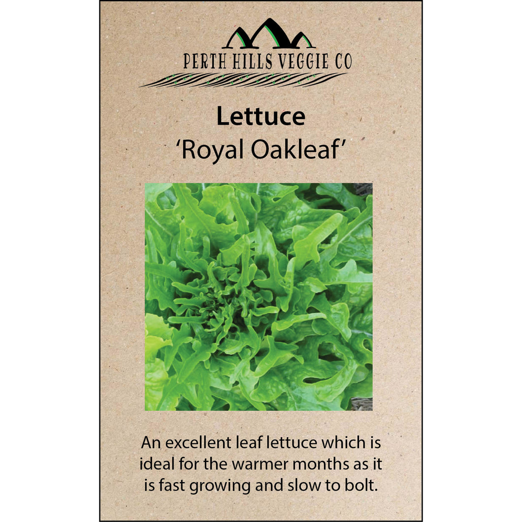 Lettuce 'Royal Oakleaf'