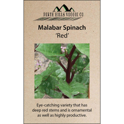 Malabar Spinach 'Red'