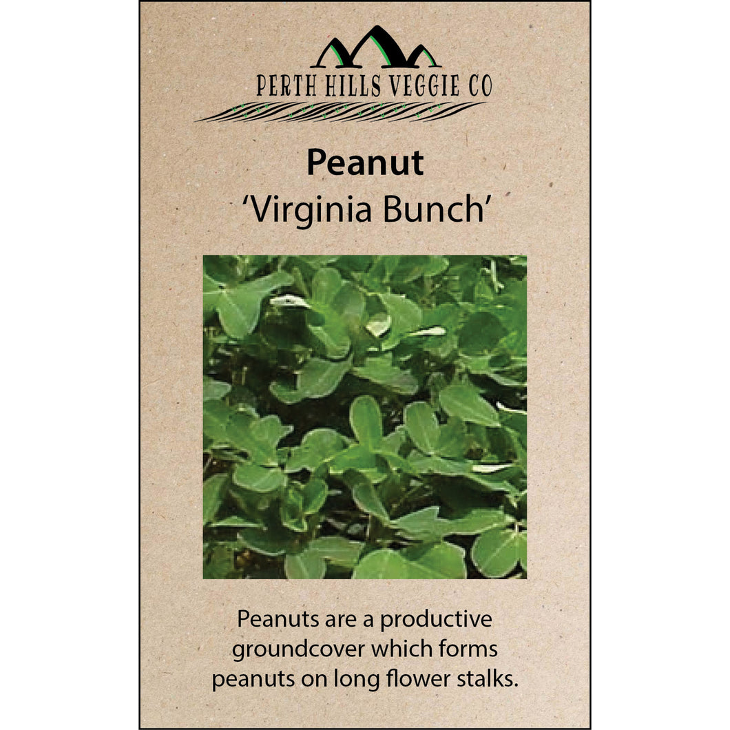 Peanut 'Virginia Bunch'
