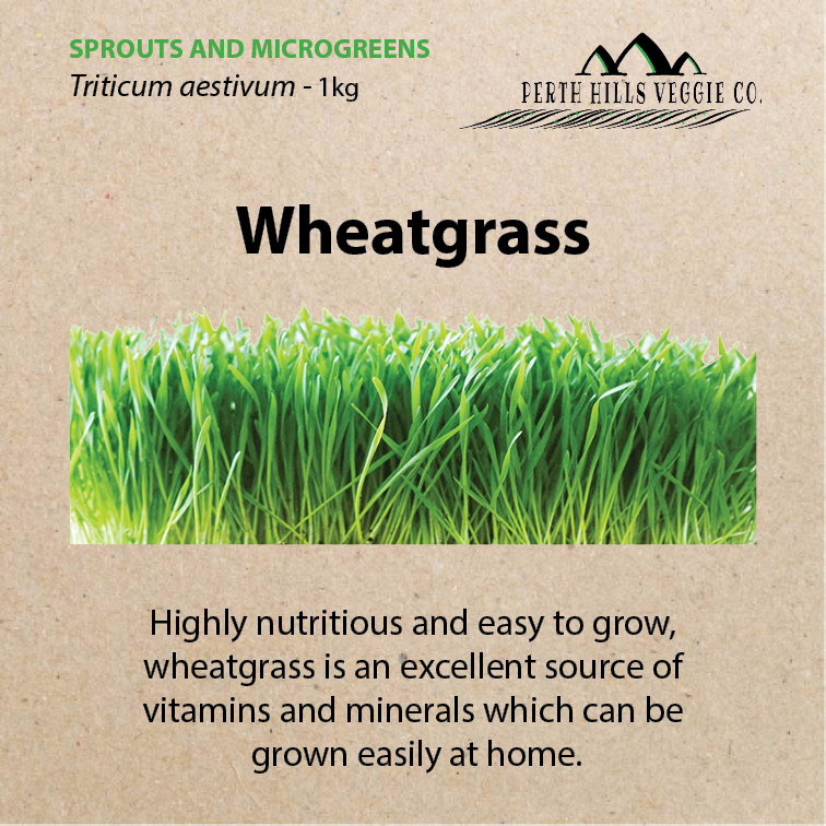 Wheatgrass Seeds 1KG Bulk Pack