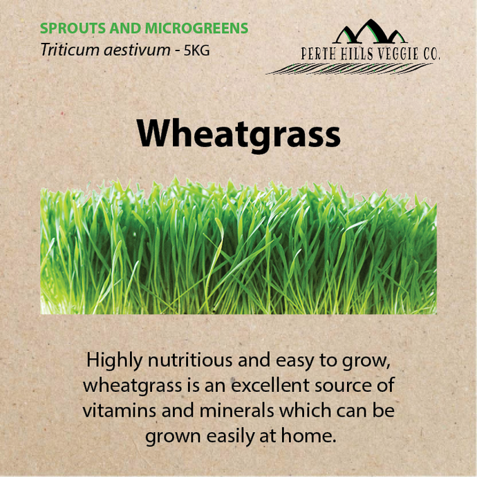 Wheatgrass Seeds 5KG Bulk Pack