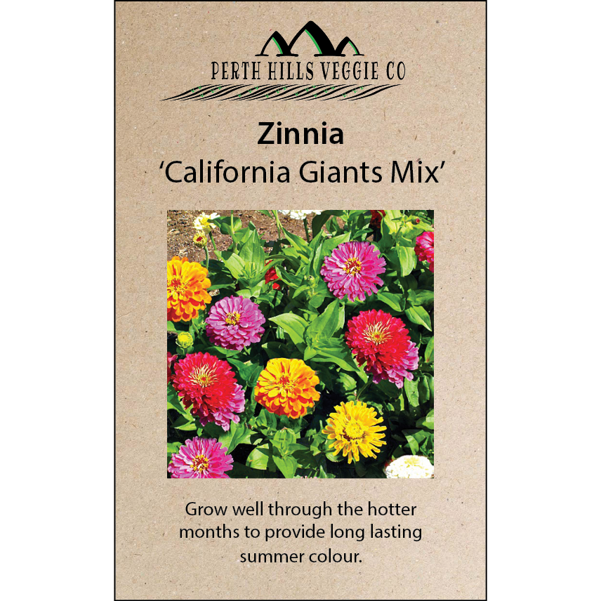 Zinnia 'California Giants Mix'