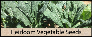 Heirloom Vegetable Seeds