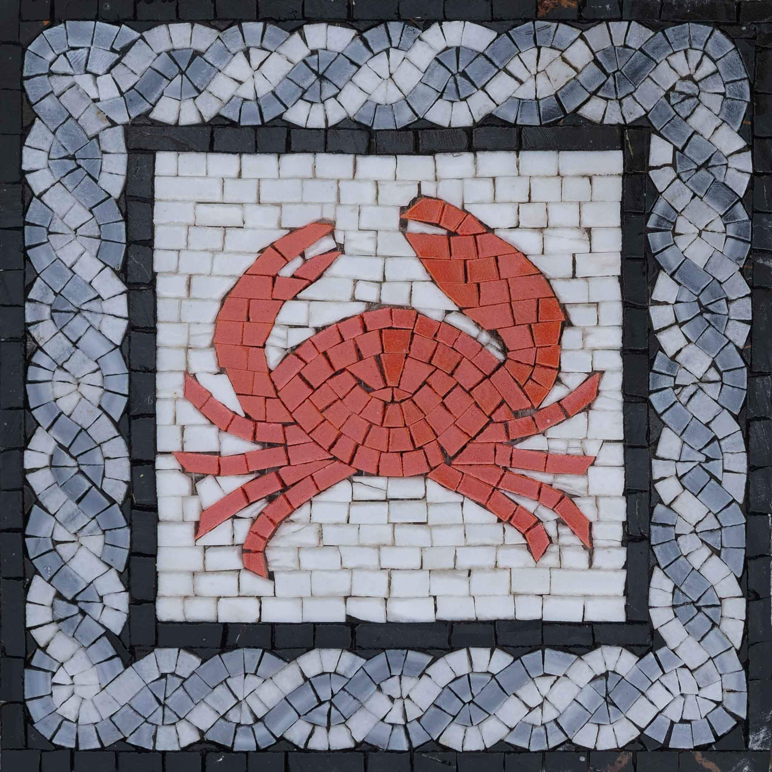 Crab On white In A Blue Frame