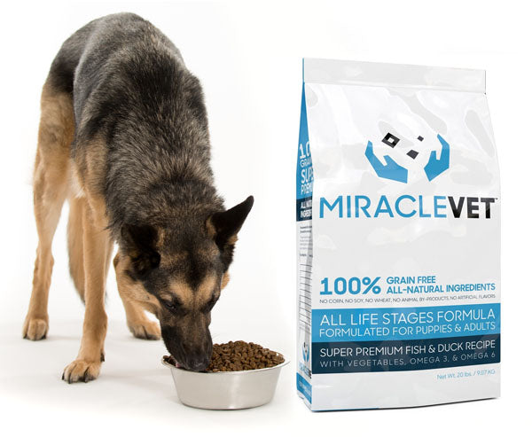 10 Ingredients To Look For In A Healthy Dog Food