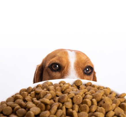 How To Tell If You Are Really Buying a Healthy, Natural Dog Food