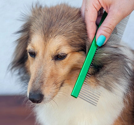 7 Home Remedies for Dog Hair Loss