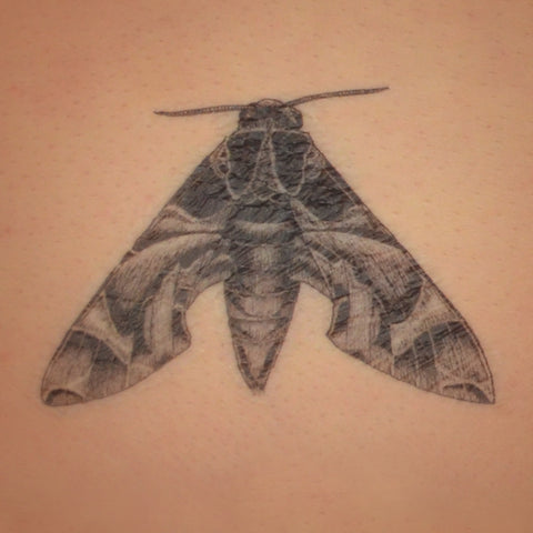 Oelander Hawk Moth temporary tattoo