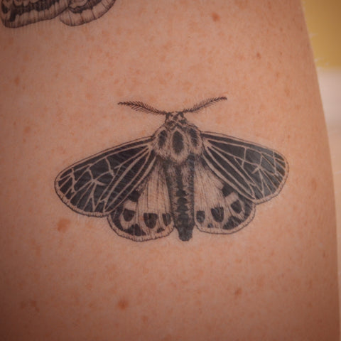 Tiger Moth temporary tattoo